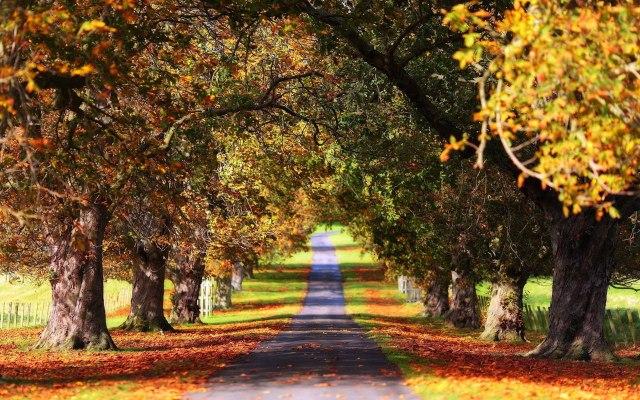 algy autumn 2