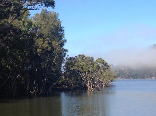 MJ River Mangrove Fog