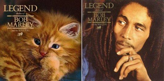 cat-and-bob-marley