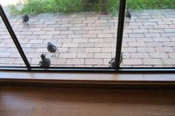 Viv Birdies