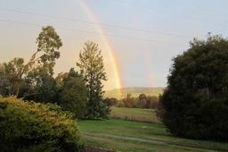 Viv Rainbow