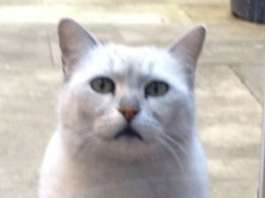 Random Photo of George the Cat
