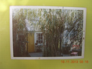 Our  first house in Balmain around 1970