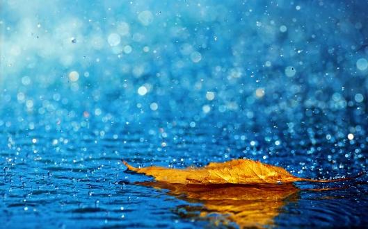 rain 2-1.jpg