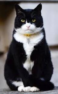 Gordons Cat