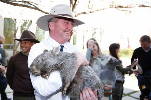 Barnaby Wombat